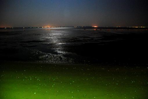 mer2.jpg