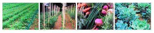 jardins-de-gohelle.jpg