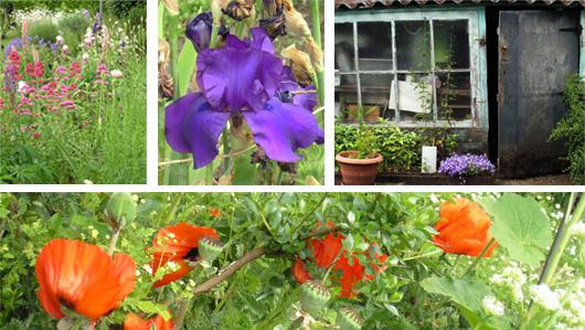beau-jardin-aux-iris.jpg