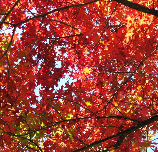 44-automne.jpg