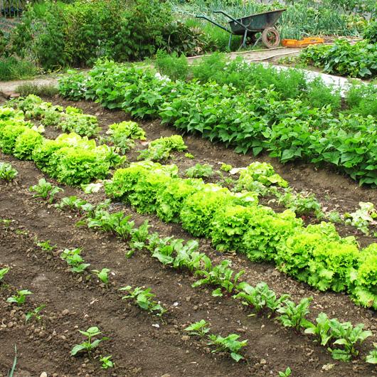 e-jardin.jpg