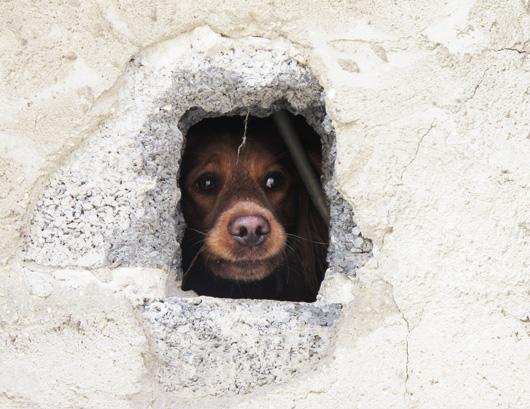 i-portrait-canin.jpg