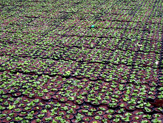 3-quelques-trace-de-dk-leffrinckoucke-flowers.jpg