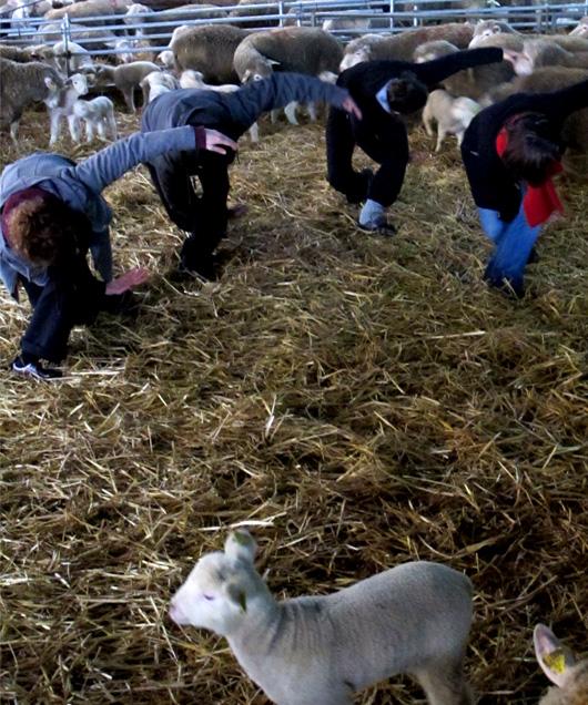 37-adage-moutons1.jpg