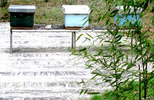 4-ruches.jpg