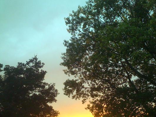 arbresoir.jpg